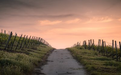 Book Review:  Pilgrims of Christ on the Muslim Road – Paul Gordon Chandler